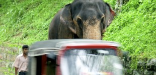 Elephant and Rickshaw, Kandy